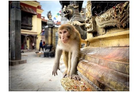 Il-guardiano-del-tempio-Kathmandu